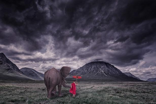 elephant-1873439_640.jpg
