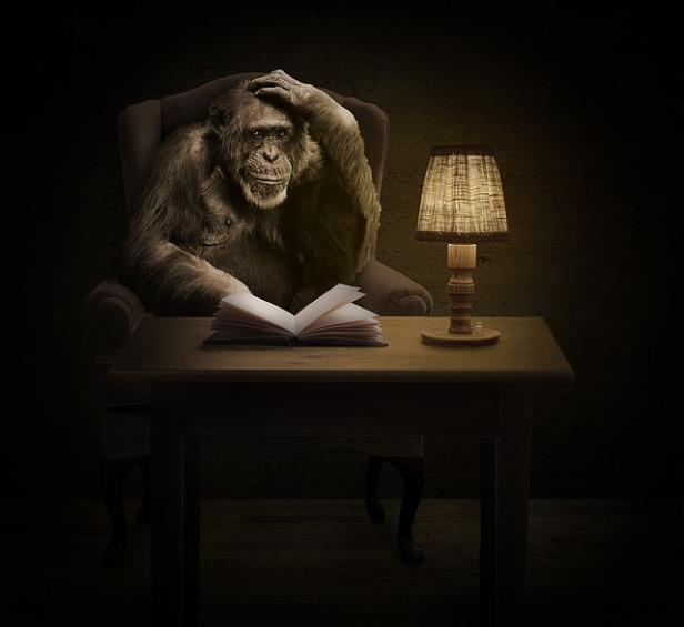 monkey-1757972_640.jpg