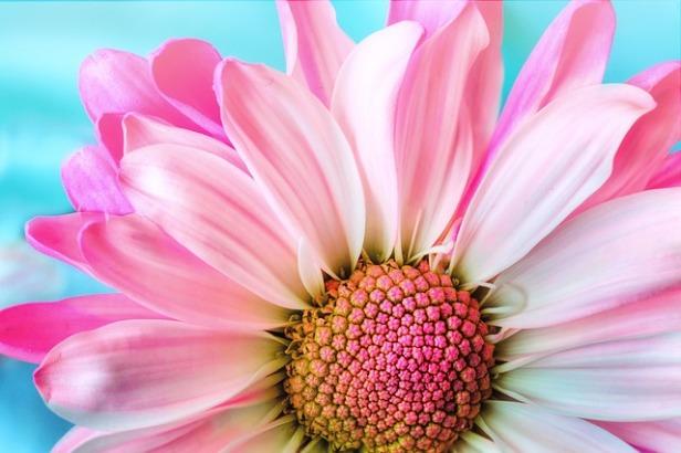 flower-3140492_640.jpg