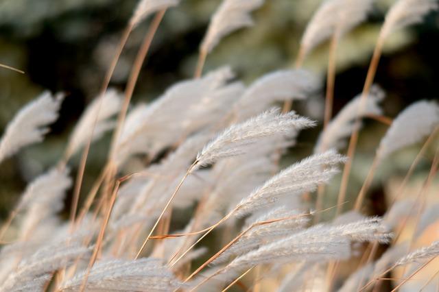 nature-3235363_640.jpg