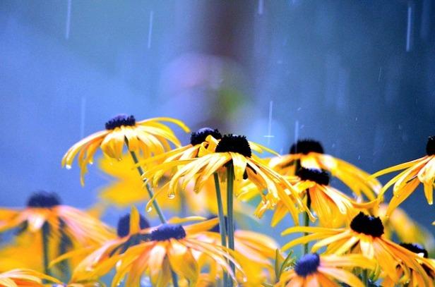 flowers-2611590_640.jpg