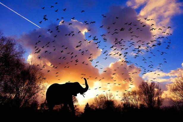 elephant-3117217_640.jpg