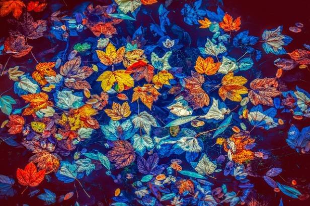 fall-leaves-3744649_640.jpg