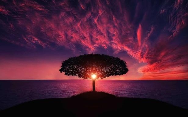 tree-736885_640.jpg
