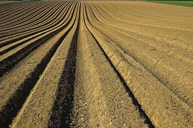 crop-1149914_640.jpg