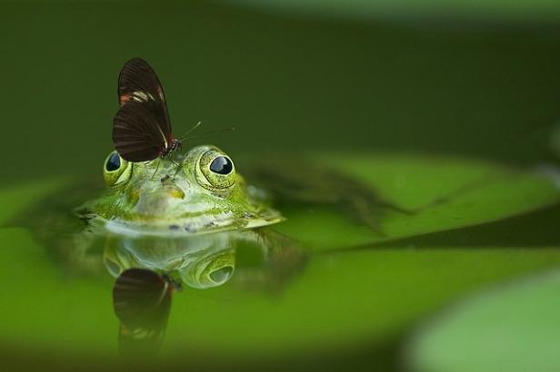 frog-540812_640 (1).jpg