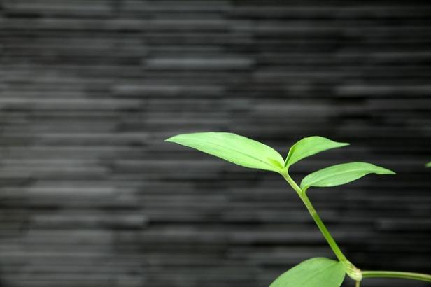 plants-2492685_640.jpg