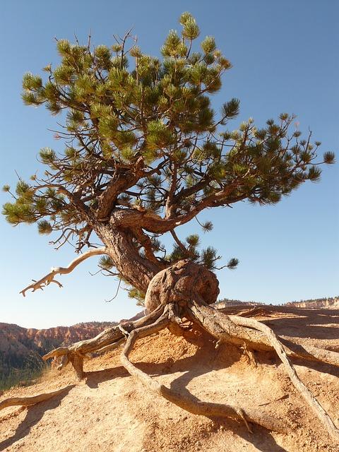 tree-4586_640.jpg
