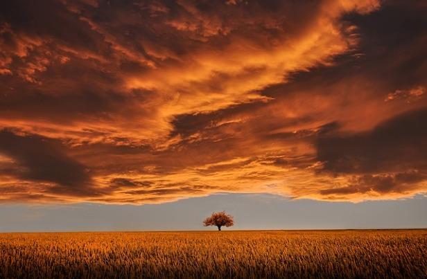 tree-736875_640.jpg