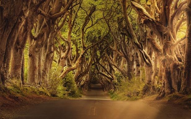 trees-3464777_640 (1).jpg