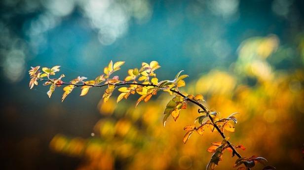 autumn-3846345_640.jpg