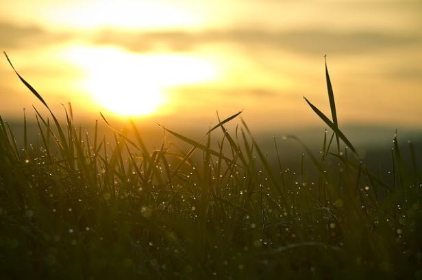 grass-546794_640.jpg