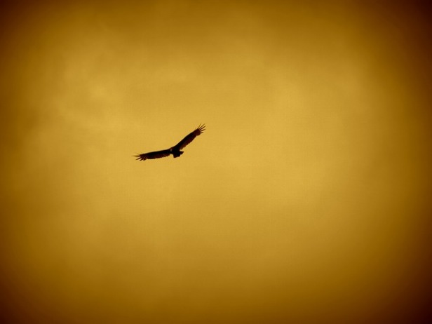 eagle-57229_640.jpg