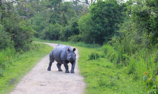 rhino-2954043_640.jpg