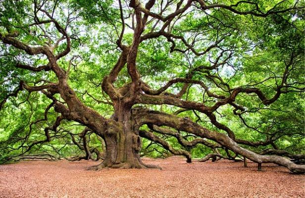 oak-tree-2018822_640.jpg