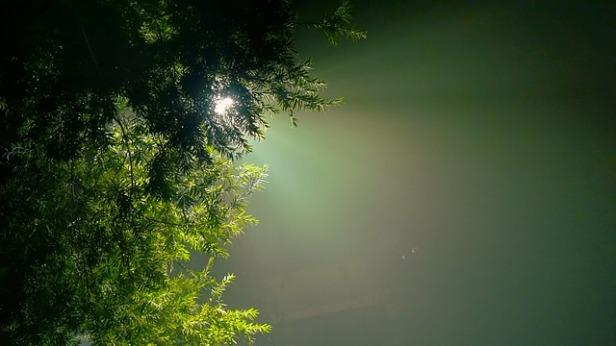 evergreen-2178702_640.jpg
