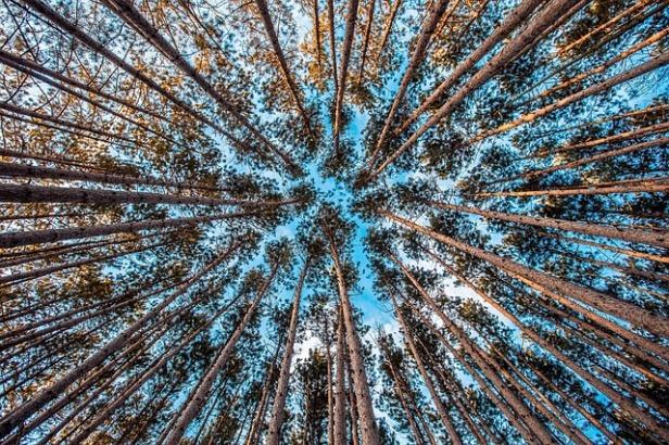 forest-1245951_640.jpg