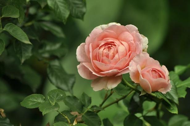 flowers-4352530_640.jpg