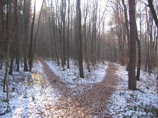 forest-path-238887_640.jpg