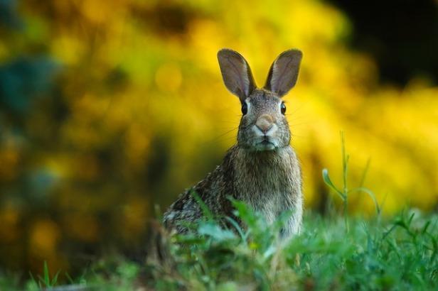 rabbit-1882699_640.jpg